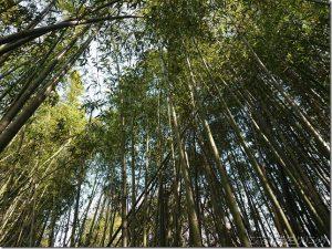 【3月19日(木)】「~春の浩然の気を養おう!~ 散策とバーベキュー」の報告