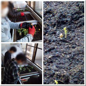 レイズドベッドを使用した園芸療法~ビニールハウスが完成~