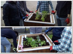 レイズドベッドを使用した園芸活動!