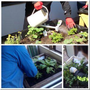 日々成長できる園芸療法