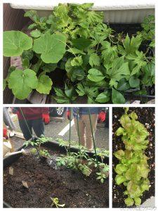 <園芸療法>種から発芽