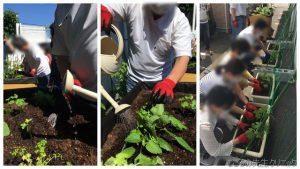 夏季の園芸療法の経過